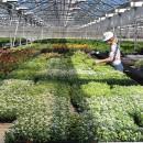 До конца июня в Череповце высадят 350 тысяч цветов