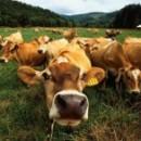 Череповецкий производитель натурального органического удобрения «Биогумус» ищет партнеров