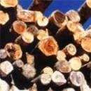 Из дерева научились делать сталь.